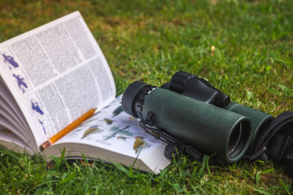 Your Cable Area Birding Guide