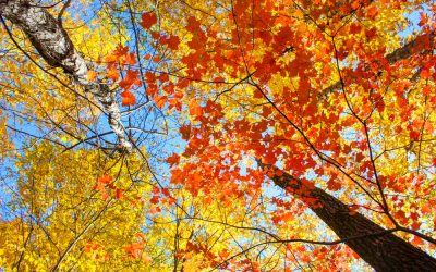Fall Color Tour in Northwest Wisconsin