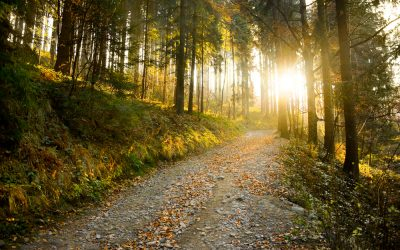 Charter Trail Town USA: The Best Trails in Cable, WI